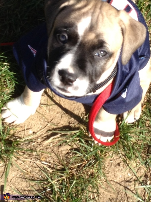 Nani lets go in the game is starting !!, Patriots Fan Dog Costume