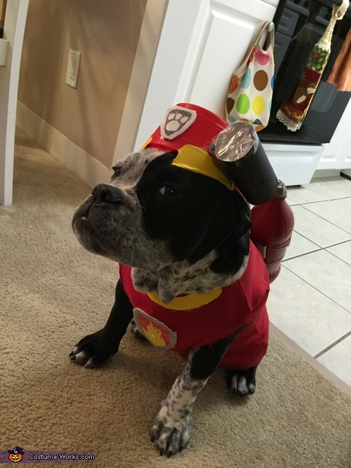'No job is too big, No pup is too small', Paw Patrol Marshall Costume