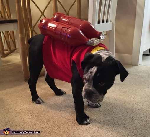 Paw Patrol Marshall Homemade Costume for Dogs