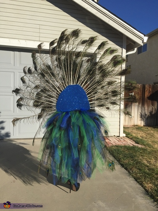 Back, tail up, Peacock Costume