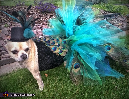 A close up of the upper details..., Peacock Dog Costume