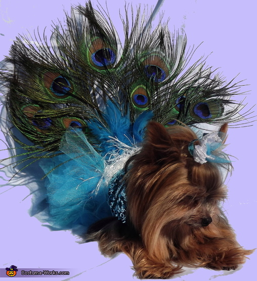 Peacock Princess , Peacock Dog Costume