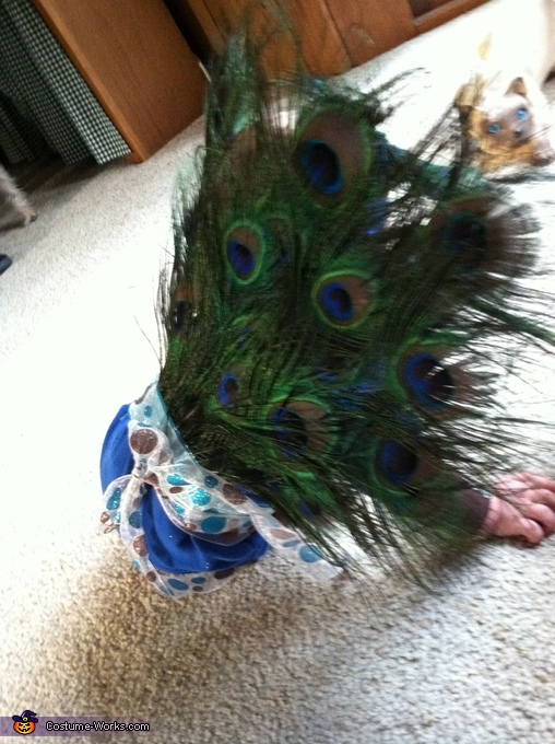 Peacock, Peacock Baby Costume