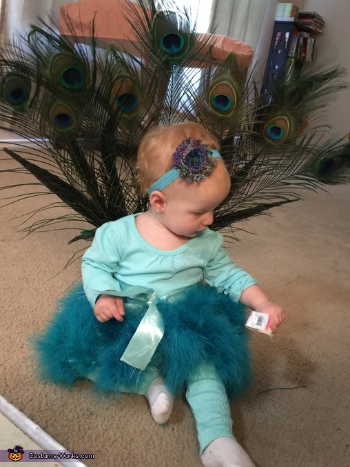 Perfection , DIY Peacock Baby Costume