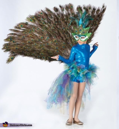 front view putting tail up, Peacock Costume