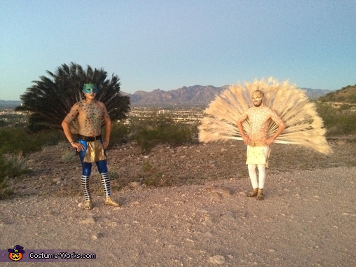 Tucson between tails, Peacocks Costume