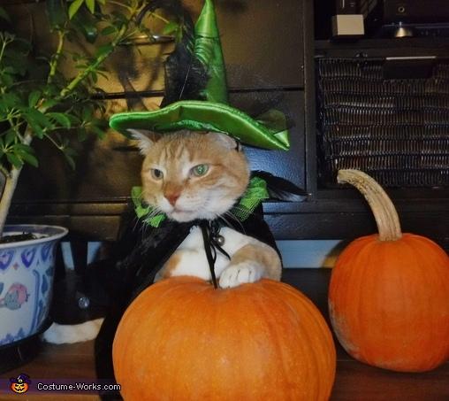 Peanut the Wizard Cat Homemade Costume
