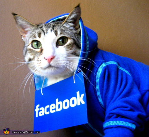 Cat in Facebook Hoodie