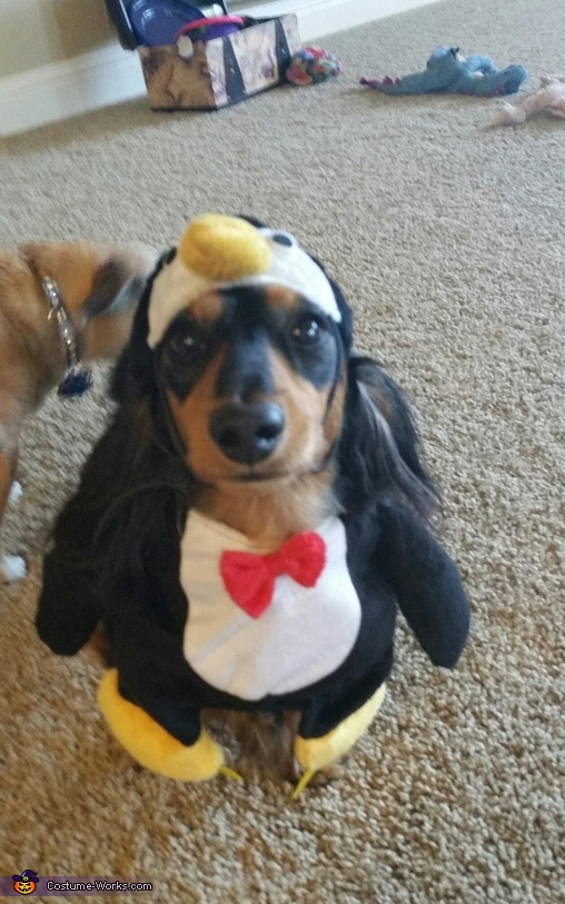 Penguin Dog Costume