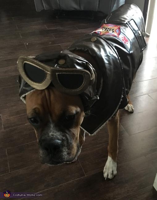 Pet Pilot Costume