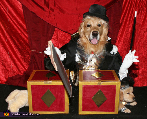Phoenix and Gryphon's Magic Show Dogs Costume