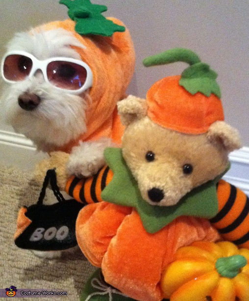 Lucky Pumpkin - Homemade costumes for pets