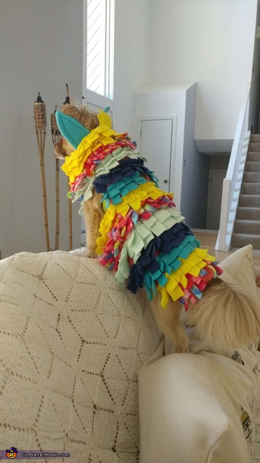 Tiny :), Piñata and Candy Costume