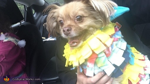 En route to a costume contest (@ Shops Around Lenox, ATL), Piñata and Candy Costume