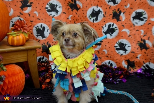 Tiny at a Halloween party in Roswell, GA, Piñata and Candy Costume