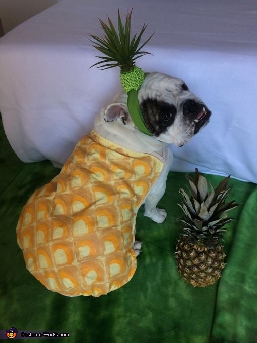 Pineapple Goblin Girl, Pineapple Psych Logo Costume