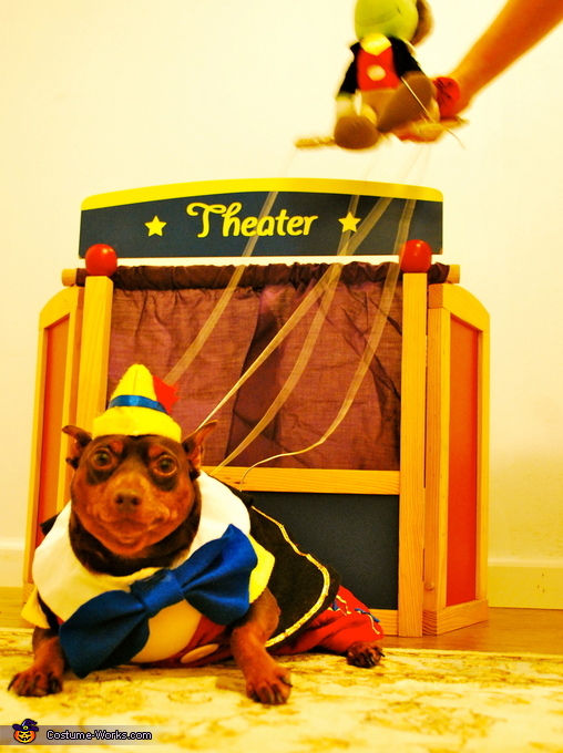 Another full view, Pinocchio Dog Costume