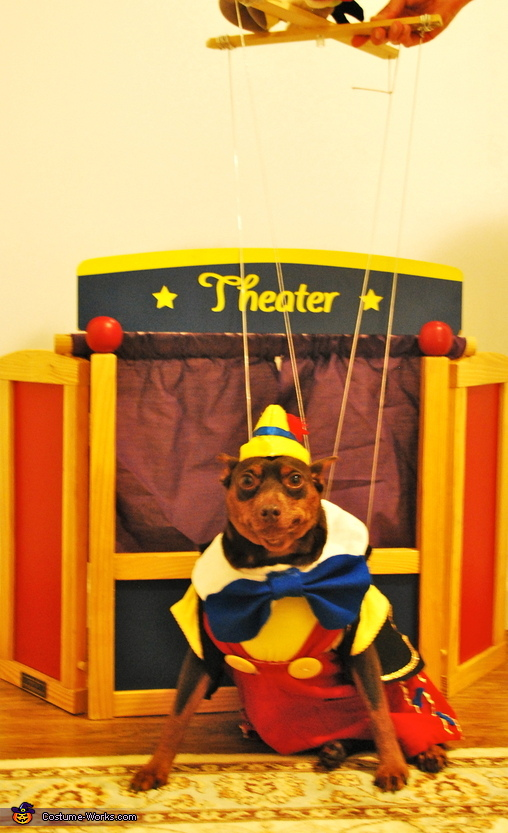 Full View, Pinocchio Dog Costume
