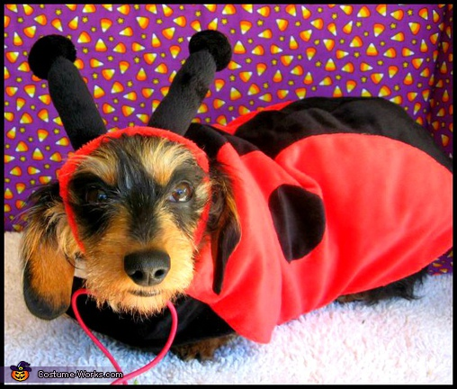 Piper says, I eat ladybugs!.  - Homemade costumes for pets