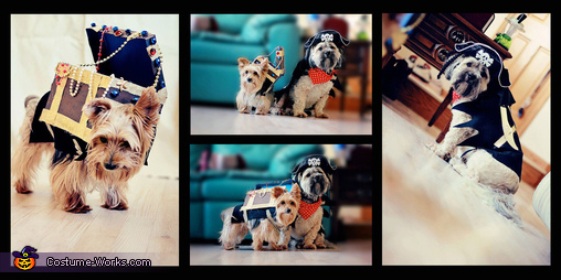 Pirate and Treasure Dogs Homemade Costume