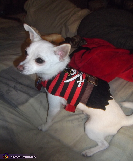 Easy Pirate Dog Costume