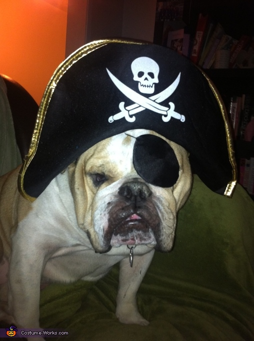 Pirate British Bulldog Costume