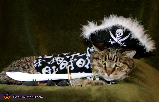 Muffin the Pirate - Homemade costumes for pets