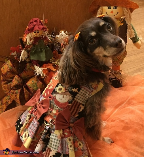 Bella Autumn Blessing, Pirate Dog Costume