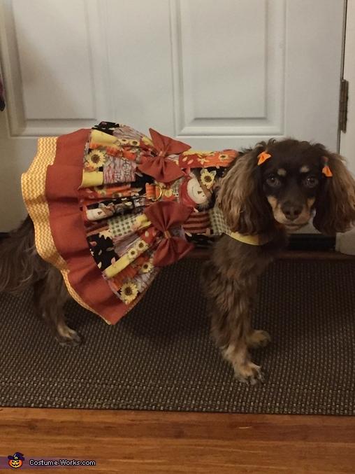 Bella Happy Thanksgiving, Pirate Costume