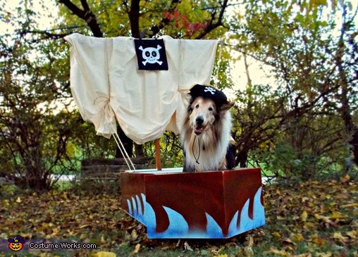 Pirate Dog Homemade Costume