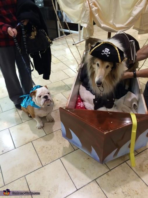 Gus and his shark pal at his parade , Pirate Dog Costume