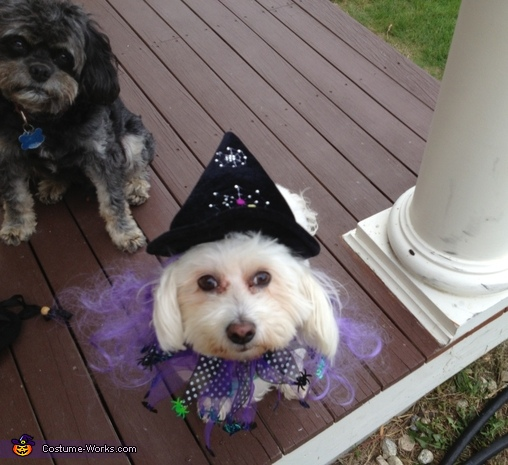Luna the Witch, Pirate Dog Costume