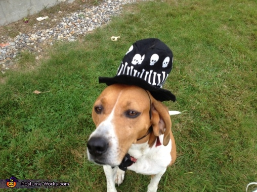 Boo!!! Miss Maggie Pinstripe, Pirate Dog Costume