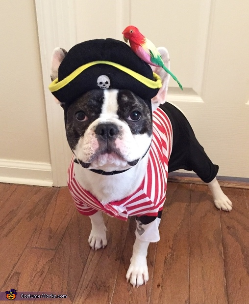 Pirate Gremlin Costume