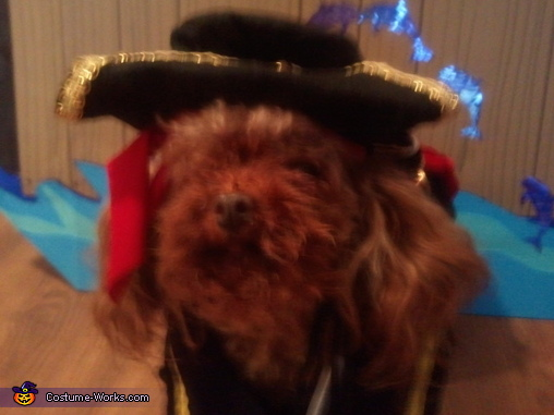 Dempsey - Poodle Pic 1, Pirate Pet Rescue Costume