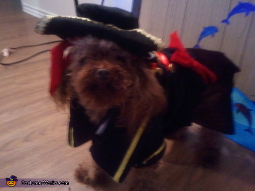 Dempsey - Poodle Pic 2, Pirate Pet Rescue Costume