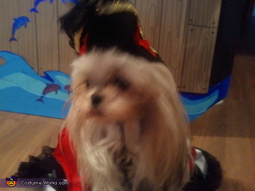 Katie the Shih Tzu - 2, Pirate Pet Rescue Costume