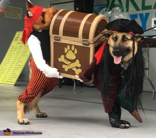 Pirate Thieves (Thief!) Dog Costume Costume