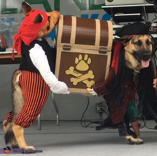Elsa - Pirate Thieves (Thief!), Pirate Thieves (Thief!) Dog Costume Costume