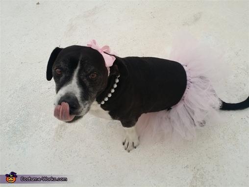 Pit Bull Ballerina Costume