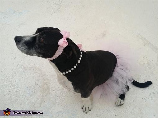 Pit Bull Ballerina Homemade Costume
