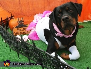Carla The 'Plus Size' Ballerina, Plus Size Ballerina Dog Costume