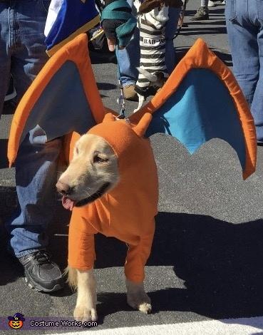 Pokemon Charizard Dog Homemade Costume