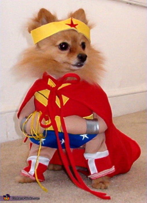 Wonder Woman - Homemade costumes for pets