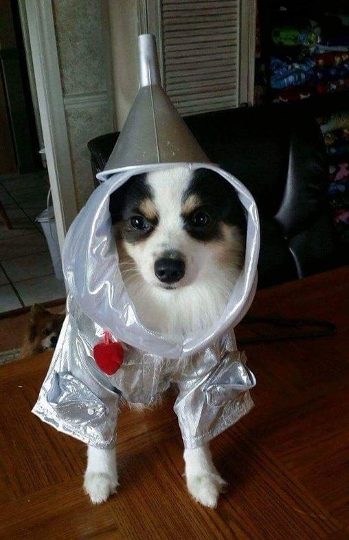 Tinman, PomWizard of Oz Costume