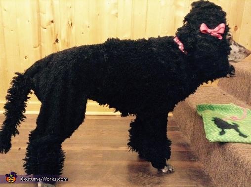 Poodle-Matian, Poodle-Matian Costume