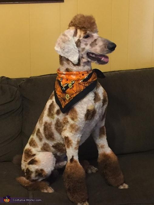 Giraffe Costume & Poodle Giraffe Costume