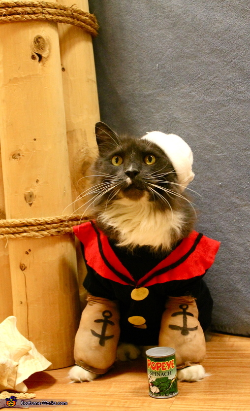 Popeye the Sailor Kitty Homemade Costume