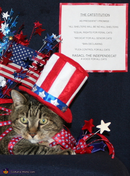 The Catstitution,  Uncle Sam Pet Costume