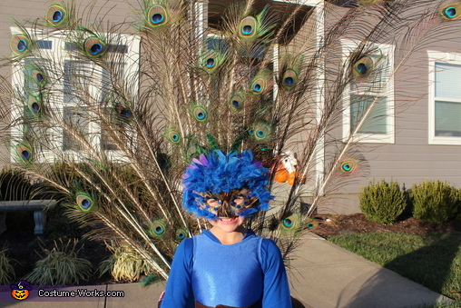 Mask and Feathers, Pretty Little Peacock Costume